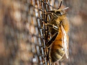 Research shows that neonicotinoids can harm bees