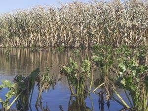 Heavy rainfall lead to flooding in farms in western Minnesota.