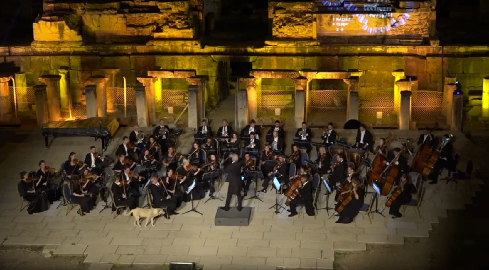 Dog walks onstage during orchestral concert in Turkey
