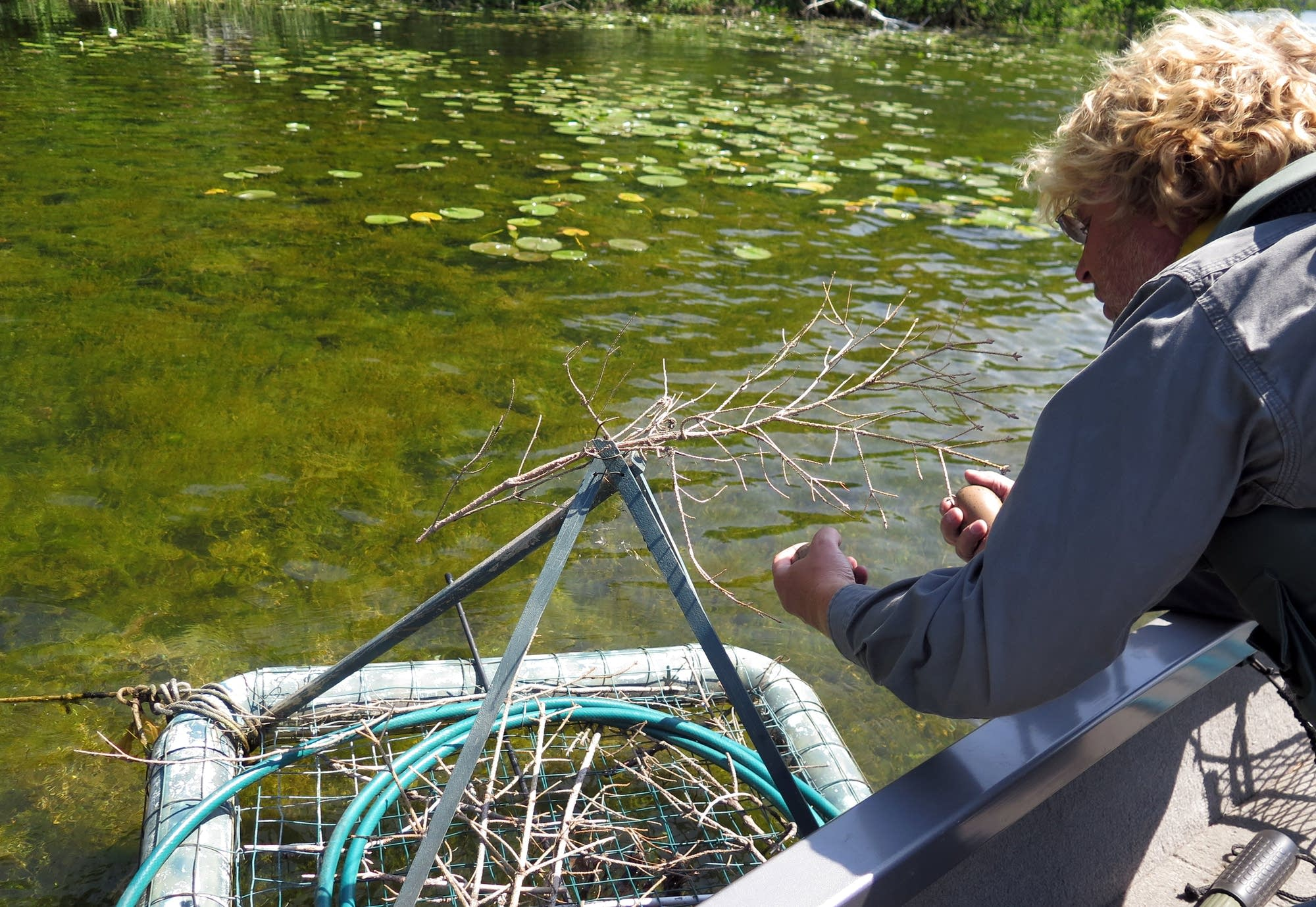 Kevin Woizeschke examines a nesting platform on West Fox Lake.