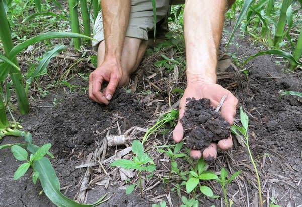 Scott Haase holds up healthy soil.