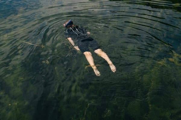 A woman in a wetsuit floats facedown in a lake.