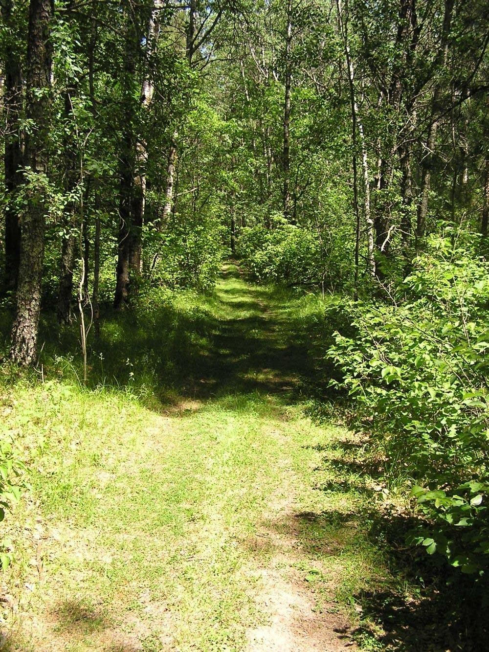 Baxter woods