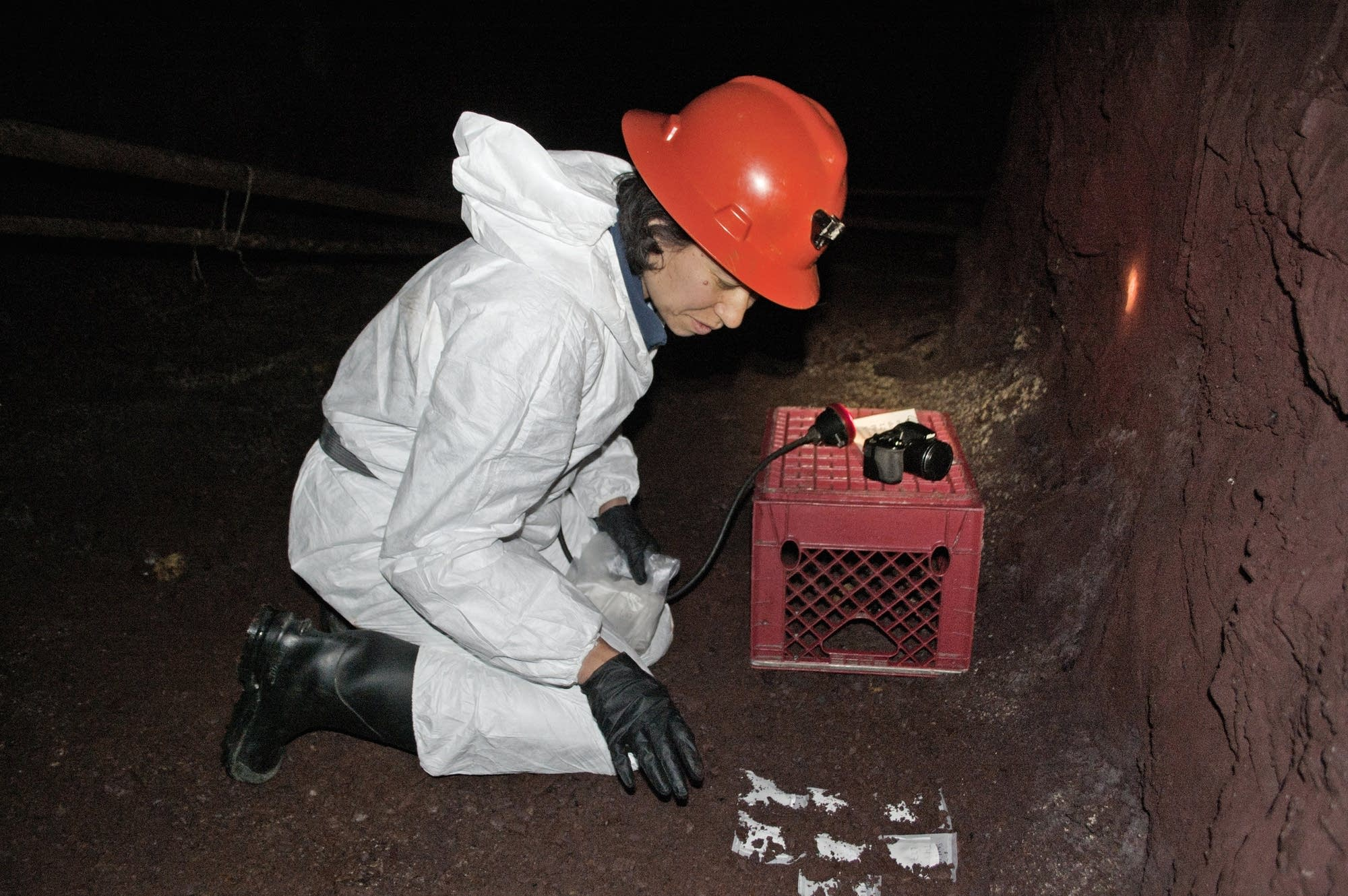 U of M scientist Christine Salomon checks fungus samples in the mine.