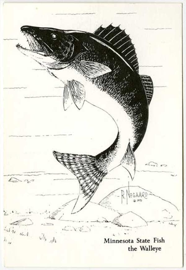 Robert Negaard's drawing of Minnesota state fish