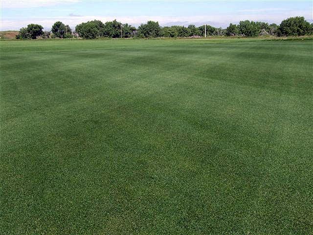 Target Field turf