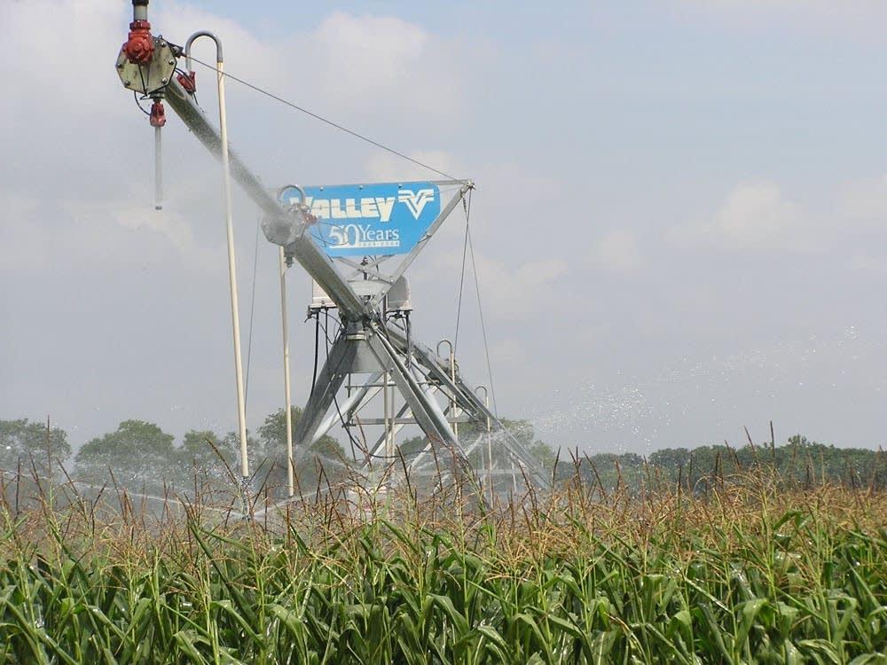 Watering corn