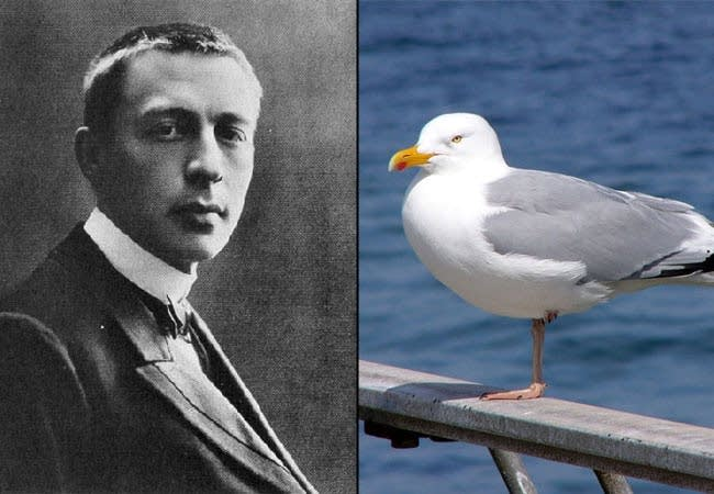 Rachmaninoff and Seagull