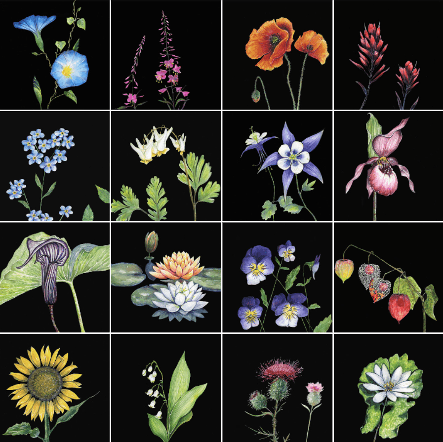 Wildflower Series by Dinah Langsjoen.