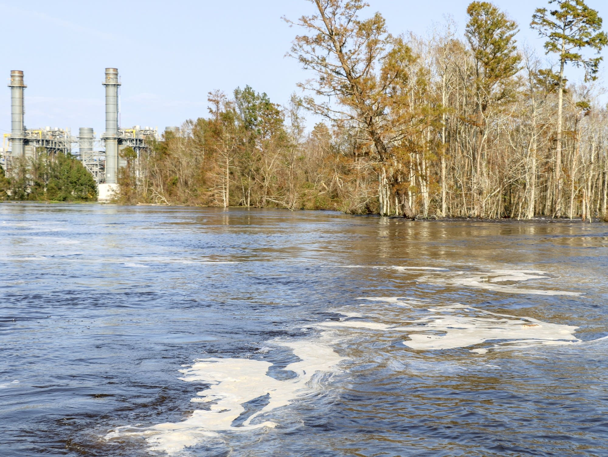 Gray Muck Floats On Top Of The Cape Fear River Near The L.V. Sutton Plant  Near Wilmington, N.C., In This Sept. 21, 2018, Photo Provided By  Earthjustice, ...