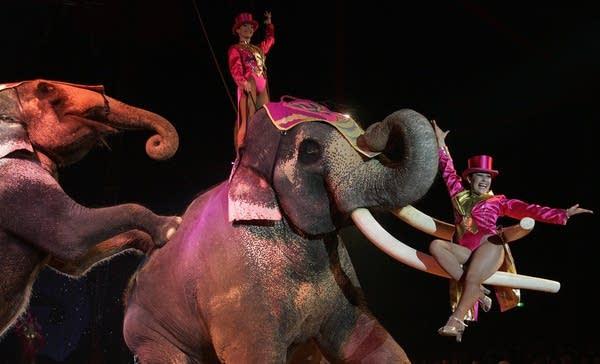 Elephants perform