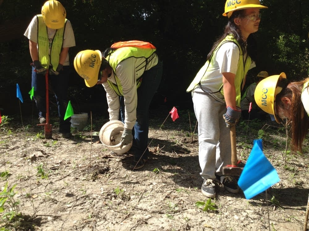 Conservation Corps volunteers plant cottonwoods