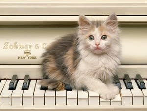 Kitten on a piano