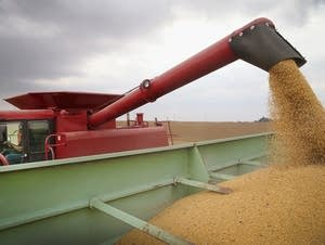 Worthington, Minn., soybean harvest in 2013