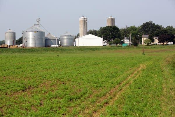 Norwood dairy farm