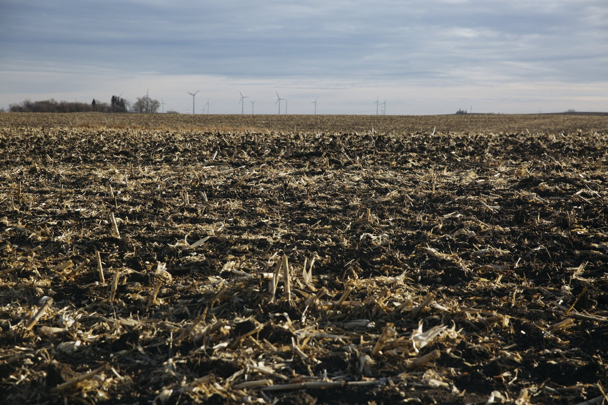 Wind turbines spin over harvested corn fields in Lake Benton, Minn.