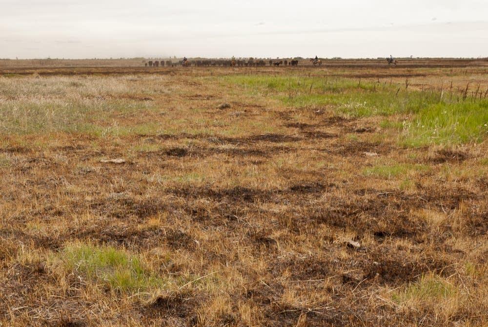 Burned pasture