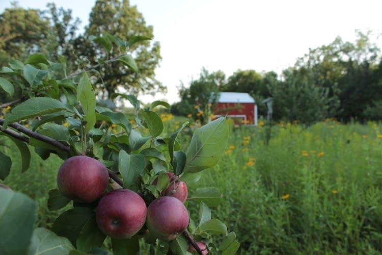 Sapsucker Farm in Mora, Minn.