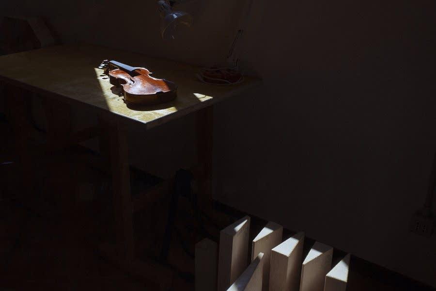 Stradivari, Amati and Guarneri used Fiemme trees