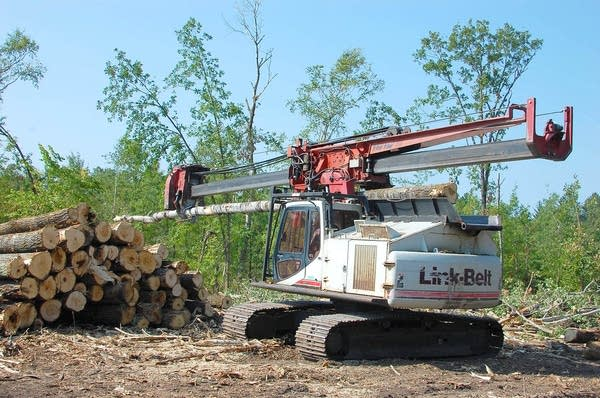 Loggers work on a site south of Bemidji.