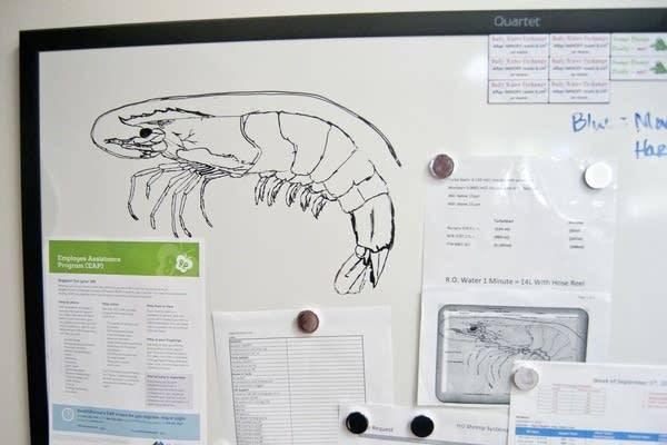 A drawing of a shrimp made by Ralco employee.