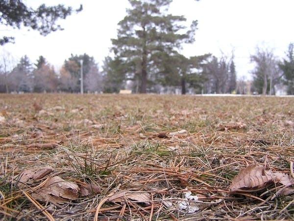 Brown ground