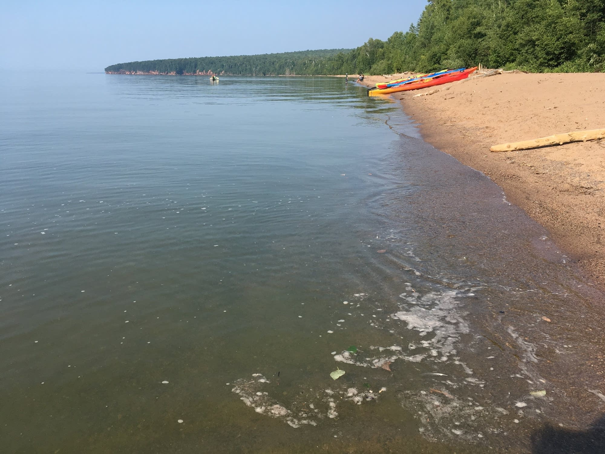 The blooms only started appearing in Lake Superior in 2012