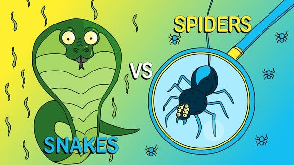 Snakes vs Spiders