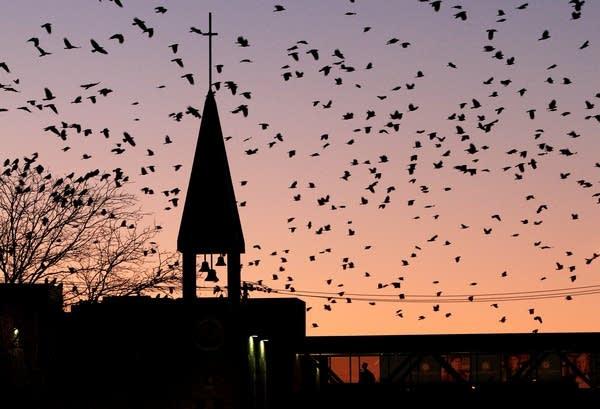 Crow-filled skies
