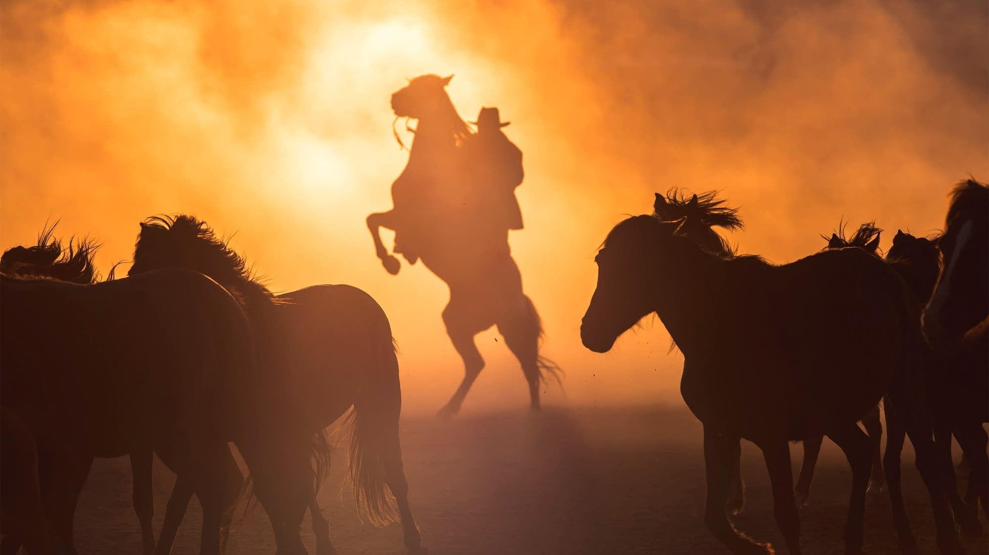 Cowboy and horses in golden light