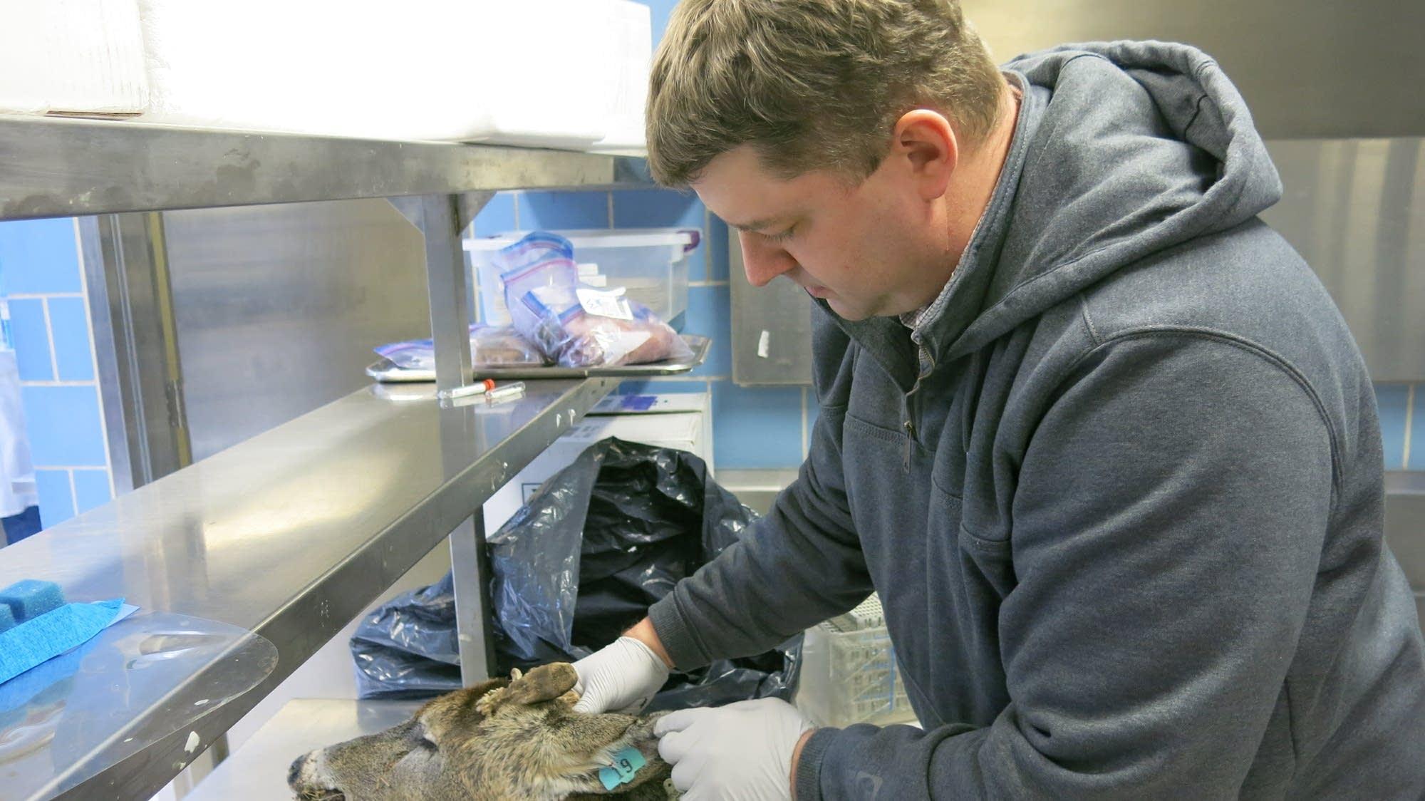Jeremy Schefers runs CWD testing at the University of Minnesota.