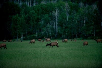 7f818f 20140718 elk in snowmass colo