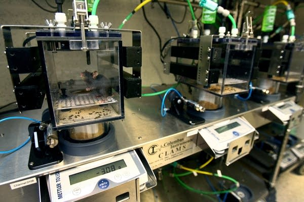 Healthspan Assessment Laboratory