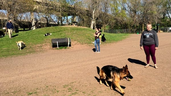 Dogs and their owners play at Duluth's Keene Creek Dog Park