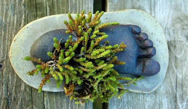There are small surprises in Crust's plantings, like this foot casting.
