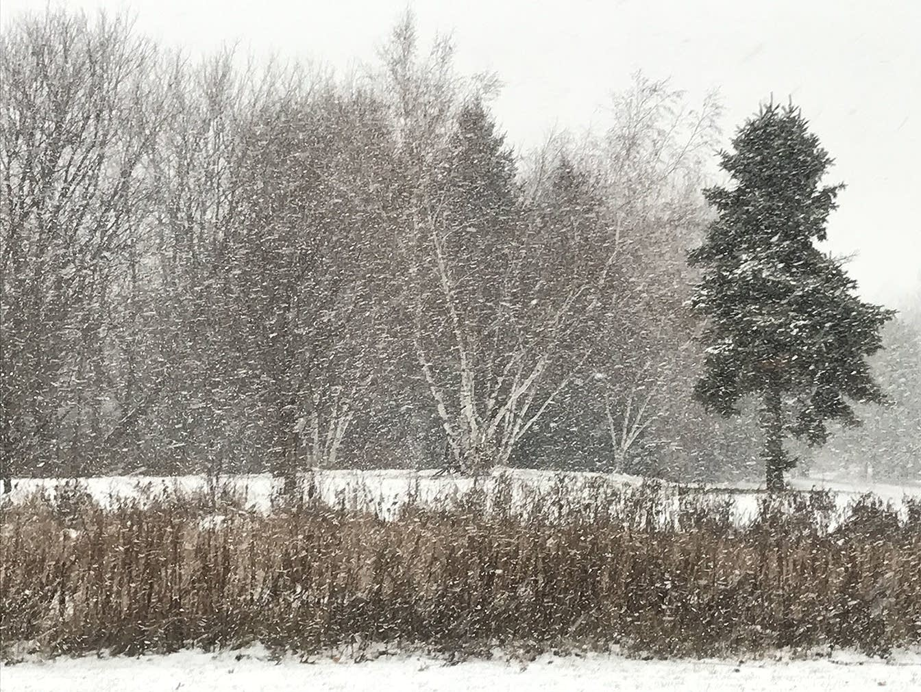 Snow falls in Chaska