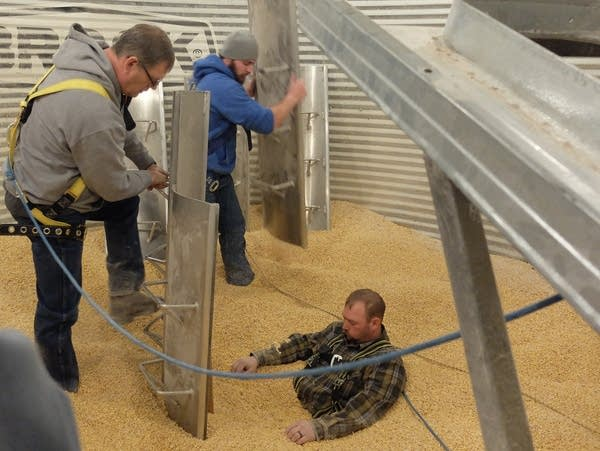 Men attempt to rescue a man buried in corn.