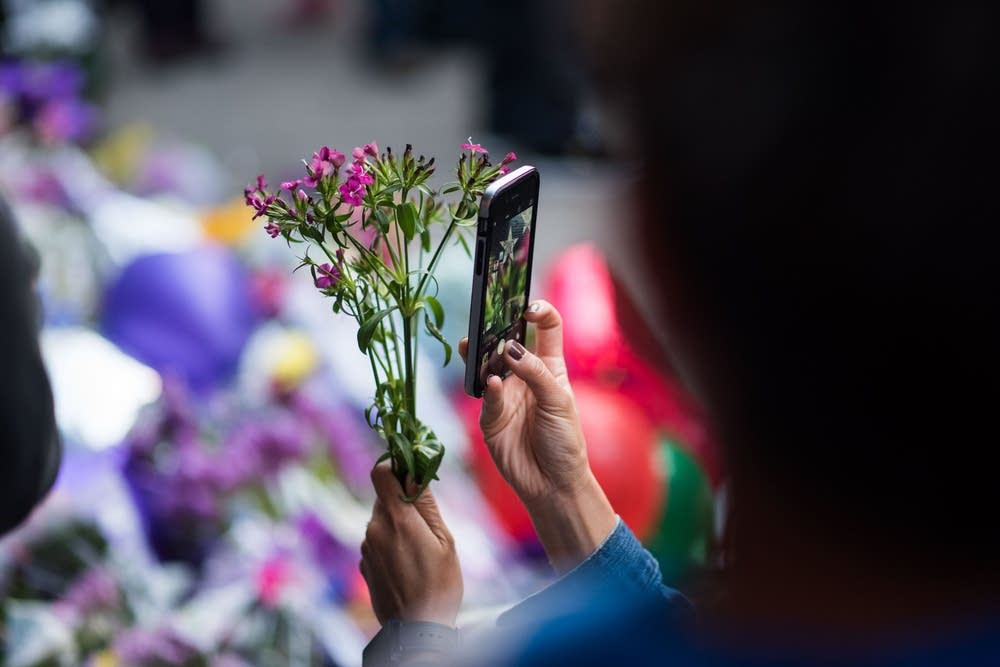 A fan takes a photo of a flower.