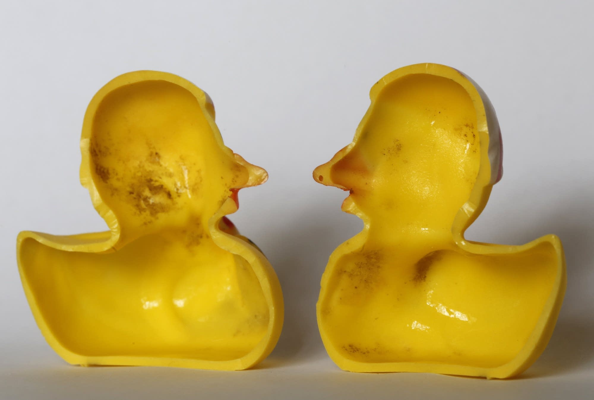 Rubber ducks hold tons of bacteria