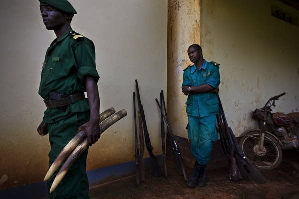 Cameroon ivory poaching