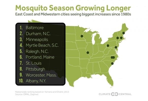 Mosquito cities
