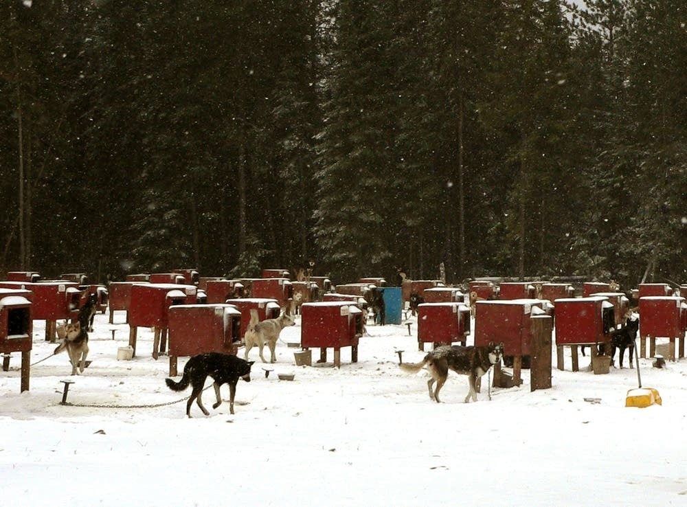 Sled dog kennel