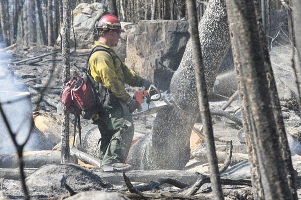 Cutting burned pine