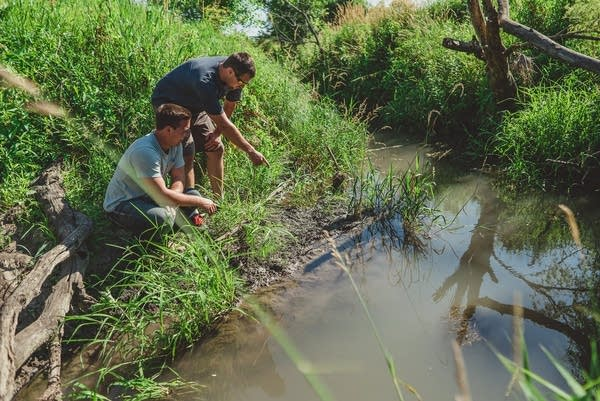 Mitchell and Zach examine a small stream near a field.