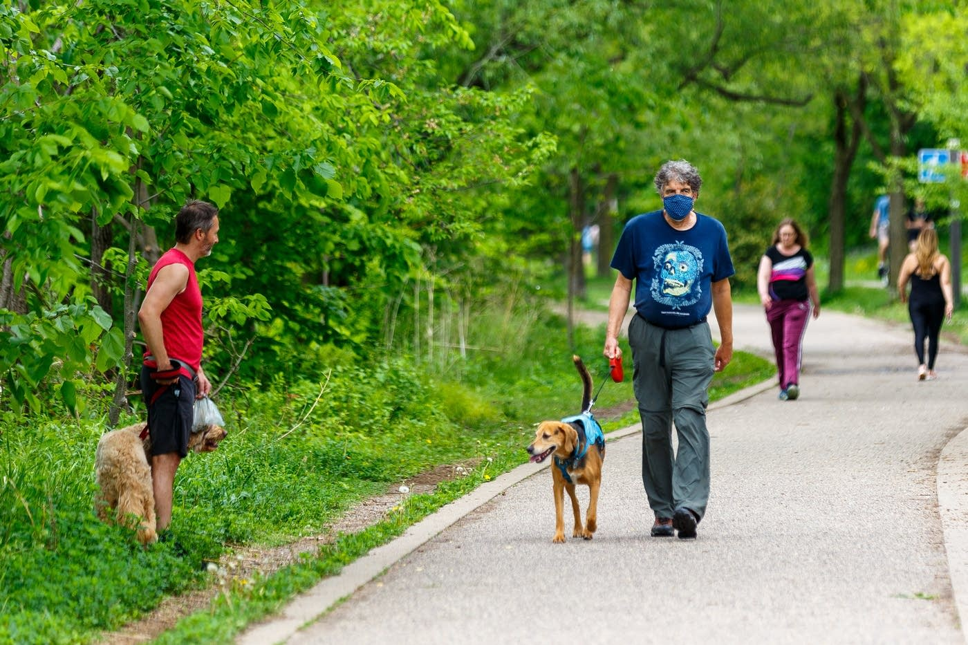 A man wearing a mask walks with his dog on Monday in Minneapolis. Kerem Yücel for MPR News