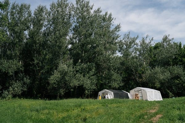 Two white tents sit on a hill in front of trees.