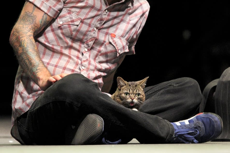Cat celebrity Lil Bub