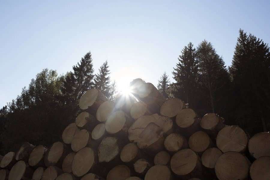 Sunlight is key to a tree's health