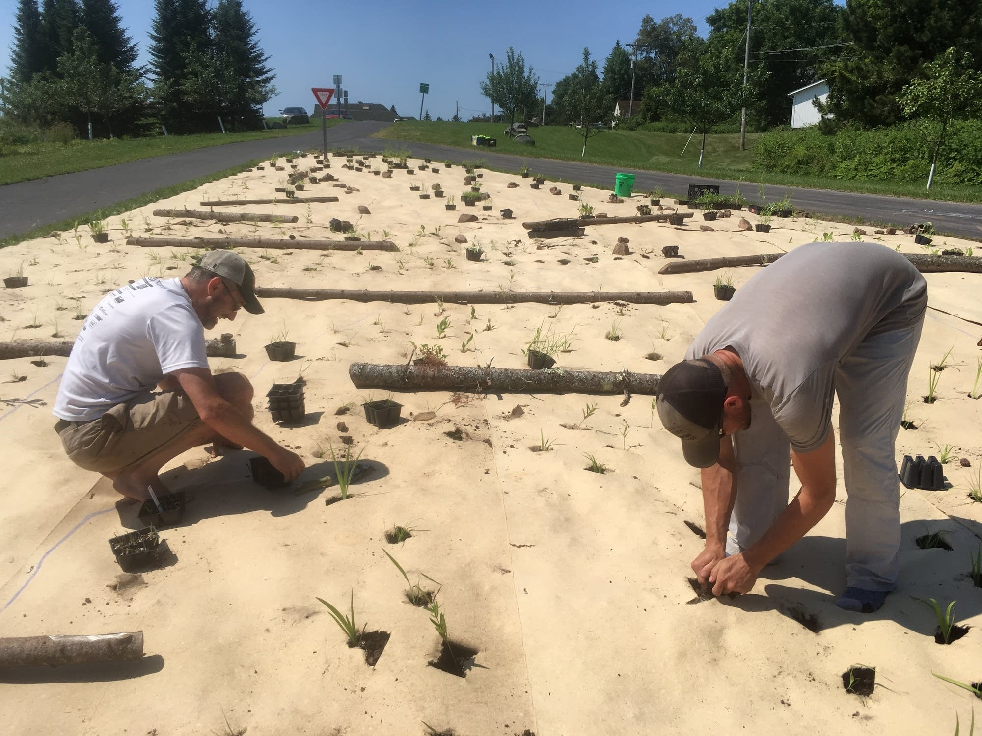 Greg Sumner of Duluth and Dan Schutte, owner of Shoreview Natives