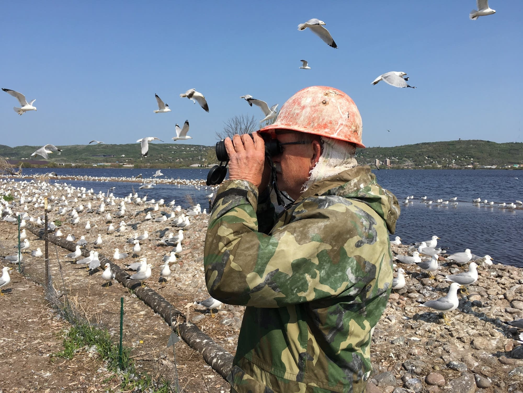 Fred Strand studies common tern nests on Interstate Island